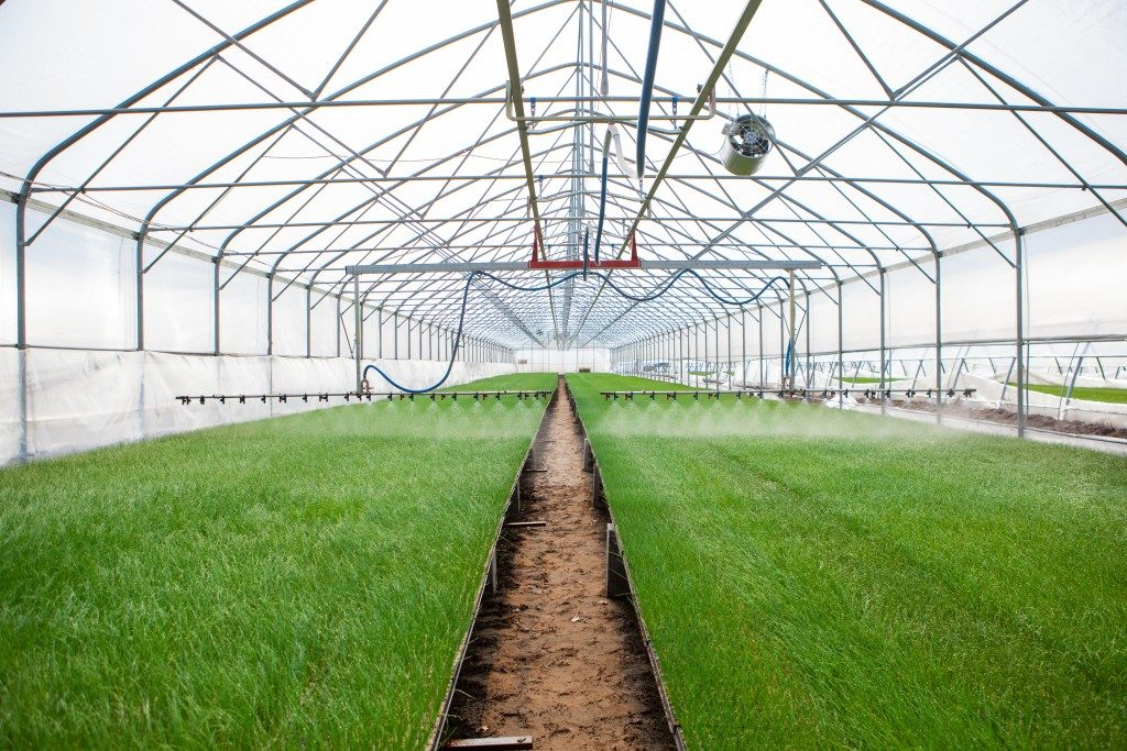 Large greenhouse structure