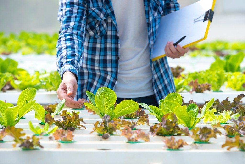 Fresh plants inside a greenhouse